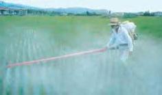Farmer sprays field