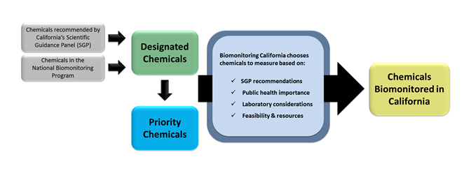 A flow chart showing the steps that a chemical goes through to become a designated chemical, a priority chemical, or a chemical biomonitored in California